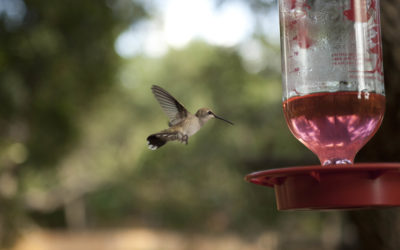 Hummingbirds!!